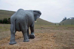 elephantcoombe